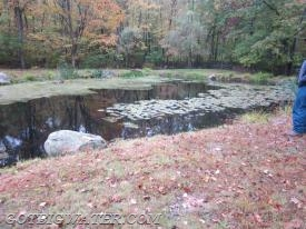 Is there usable water in this pond to support a DFH?  Is the pond healthy or on the decline?